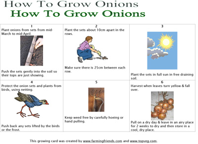 How To Grow Onions Instructions