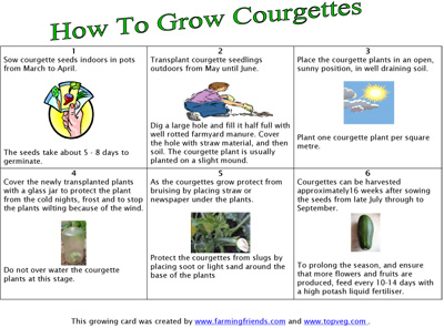 How To Grow Courgette Instructions