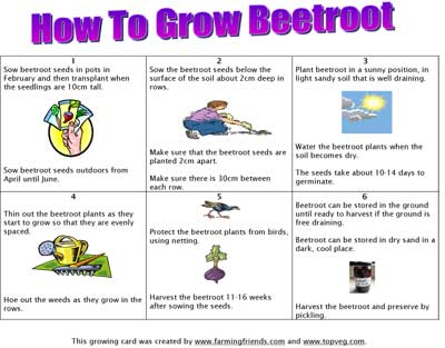 How To Grow Beetroot Instructions