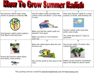 How To Grow Summer Radish Instructions