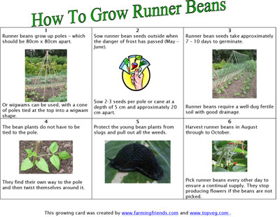 How To Grow Runner Beans Growing Card