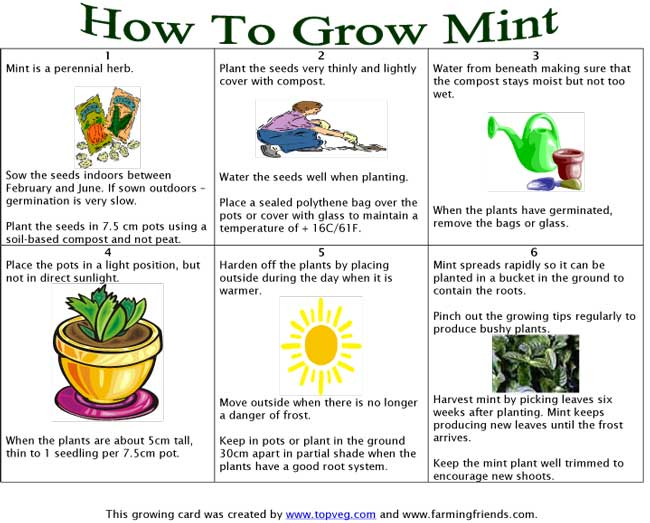 How To Grow Herbs For Cooking eBook For Sale