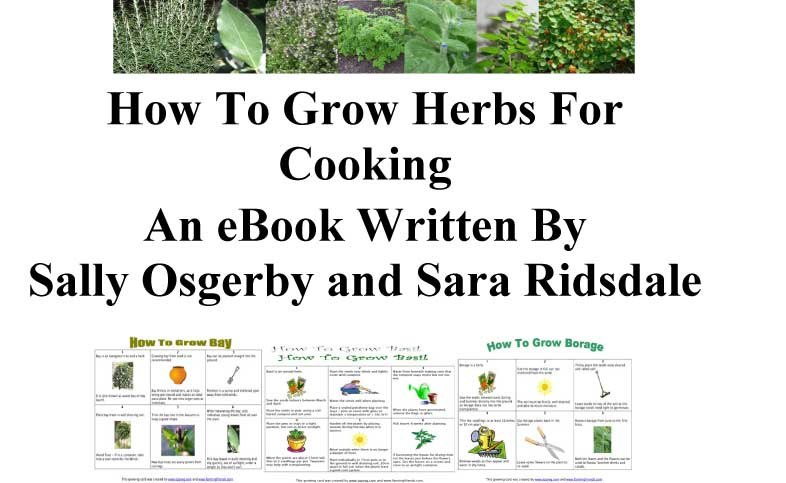 How To Grow Herbs For Cooking eBook