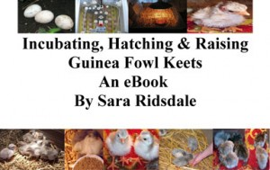 Guinea Fowl Ebook