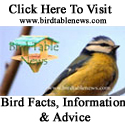 Bird Table News Website