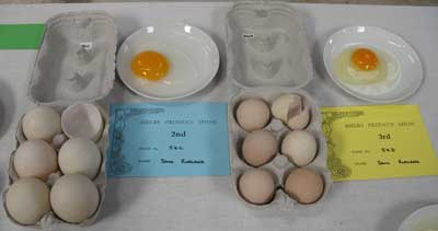 Show Winning Duck Eggs & Guinea Fowl Eggs