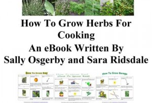 How To Grow Herbs For Cooking