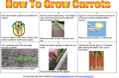 How To Grow Carrots Instructions