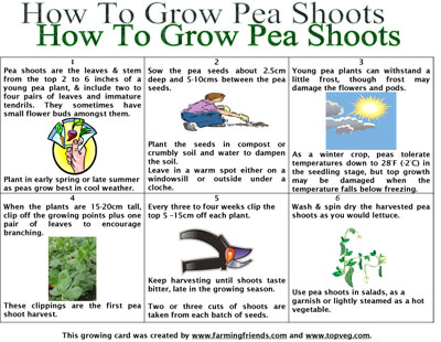 How To Grow Pea Shoots Instructions