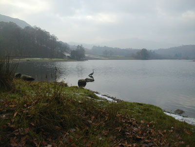 Heron At Esthwaite Taken By Dave