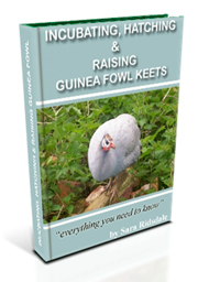 Front Cover Of Incubating, Hatching & Raising Guinea Fowl Keets An e
